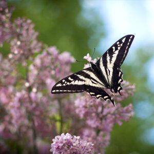 Transitions: Embracing Change (Spring Discount – 15%) @ Yasodhara Ashram